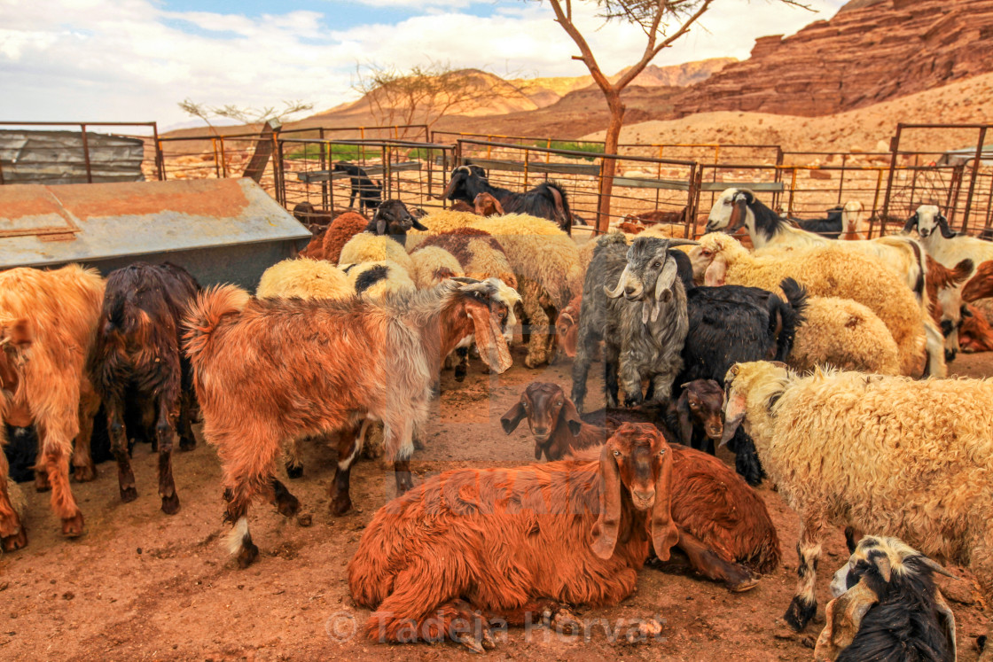 """Goats Farm"" stock image"