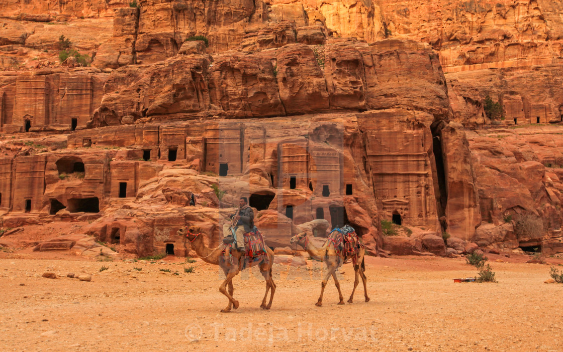 """Camles and rock tombs in Petra"" stock image"