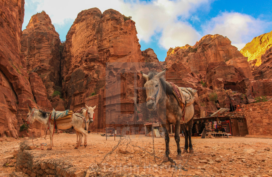 """Horses in Petra"" stock image"