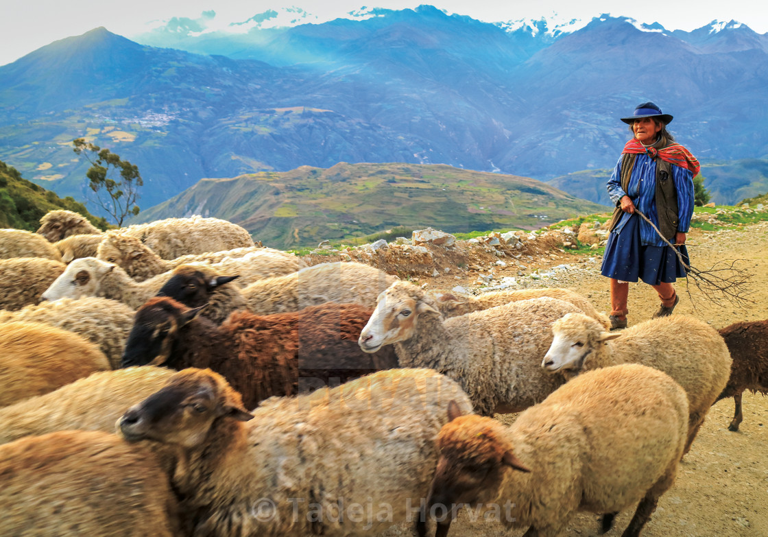 """Peruvian woman in the Andean mountains"" stock image"