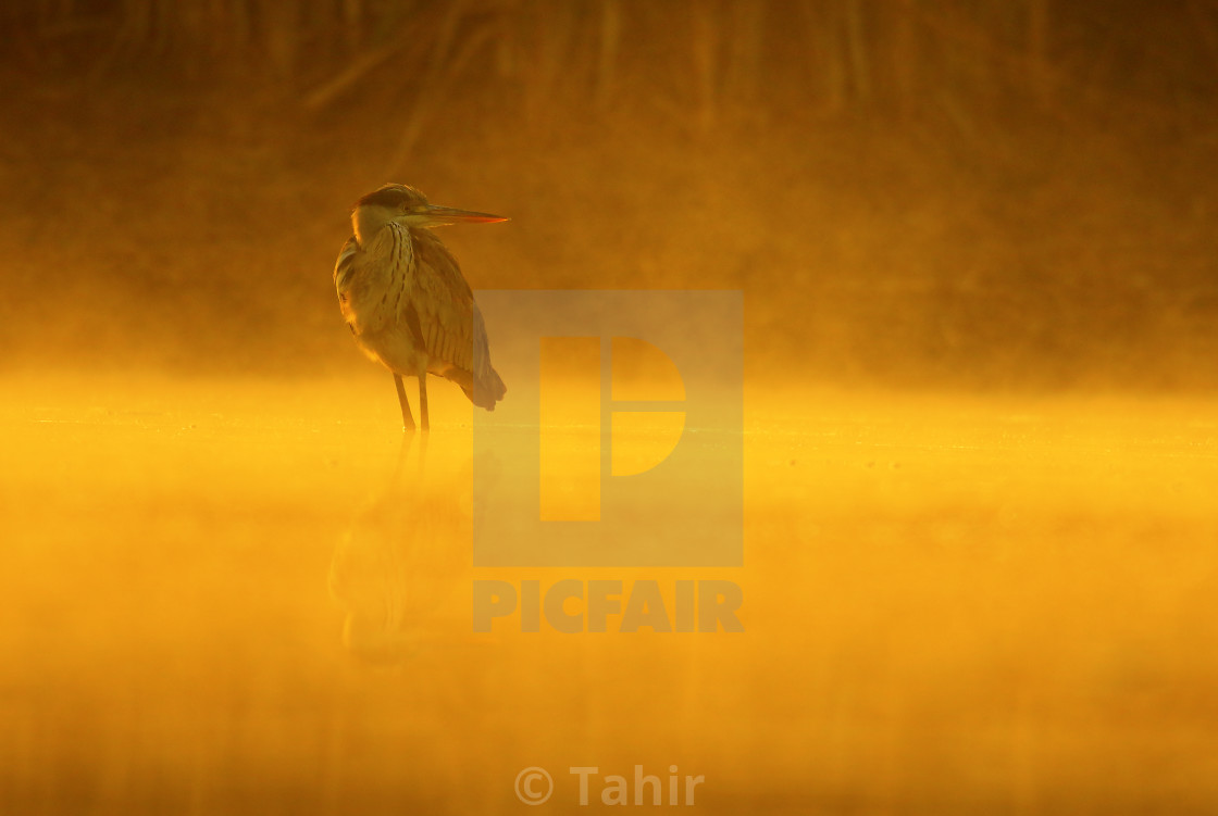 """A golden morning"" stock image"