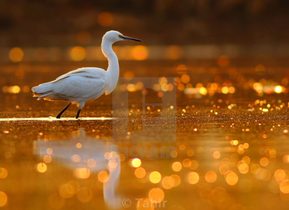 """The pond of Bokeh"" stock image"