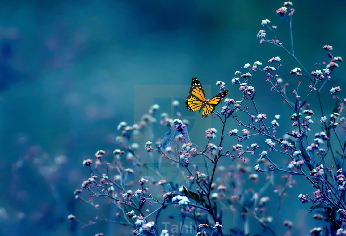 """Butterfly in nature"" stock image"
