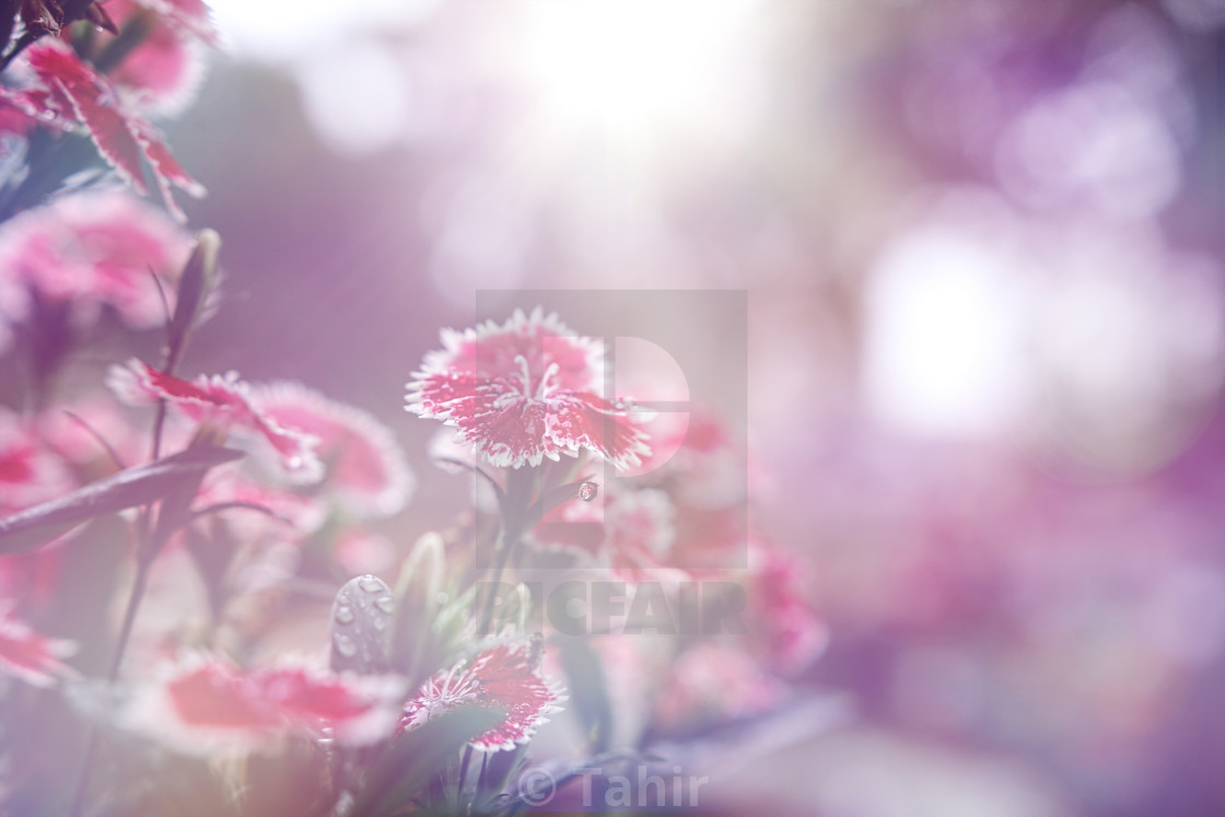 """Flower background"" stock image"