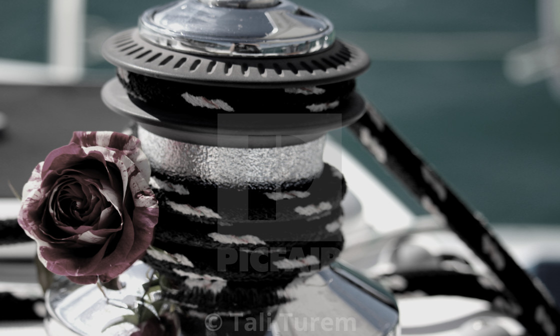 """""""Rose on Winch"""" stock image"""