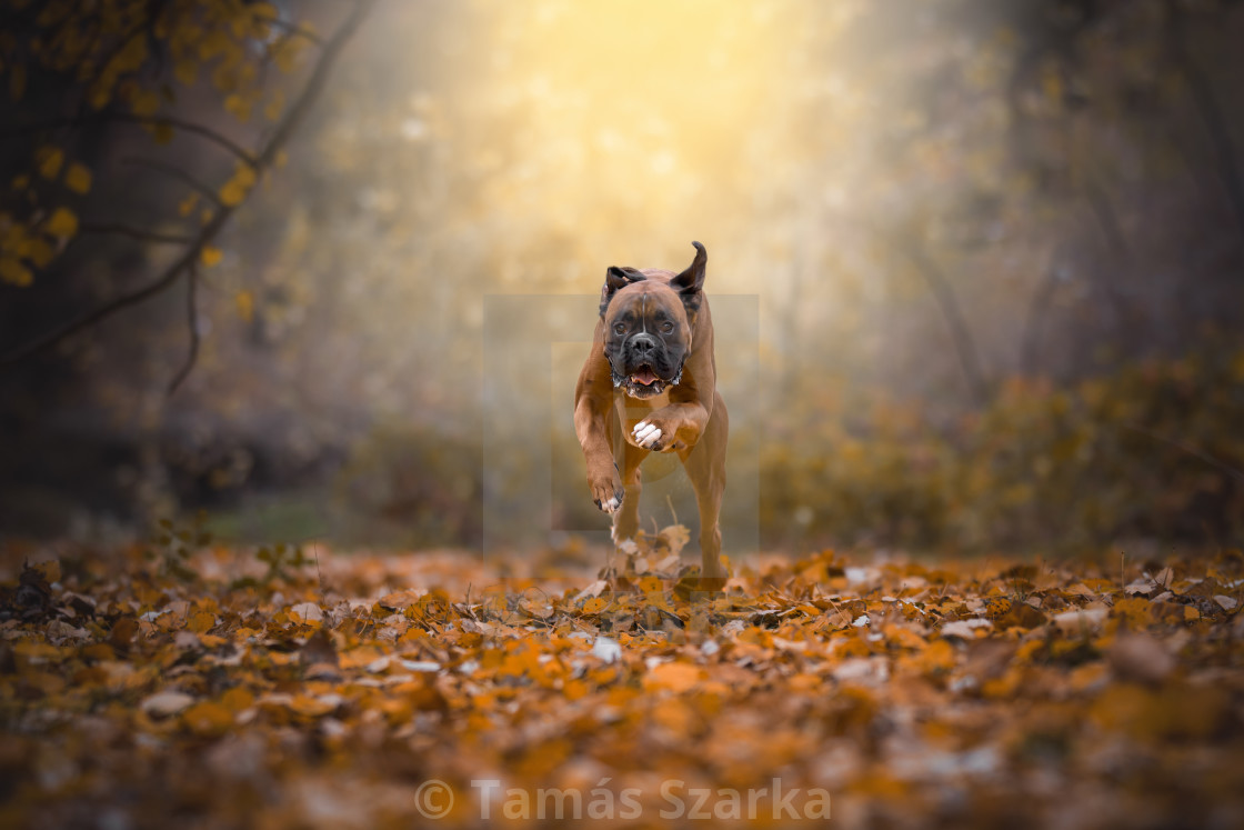 """Autumn action"" stock image"