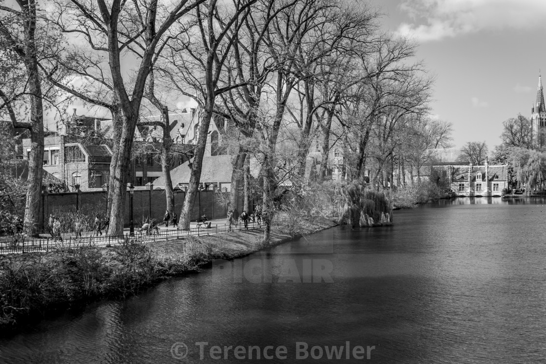 """Tree lined canal in Bruges"" stock image"