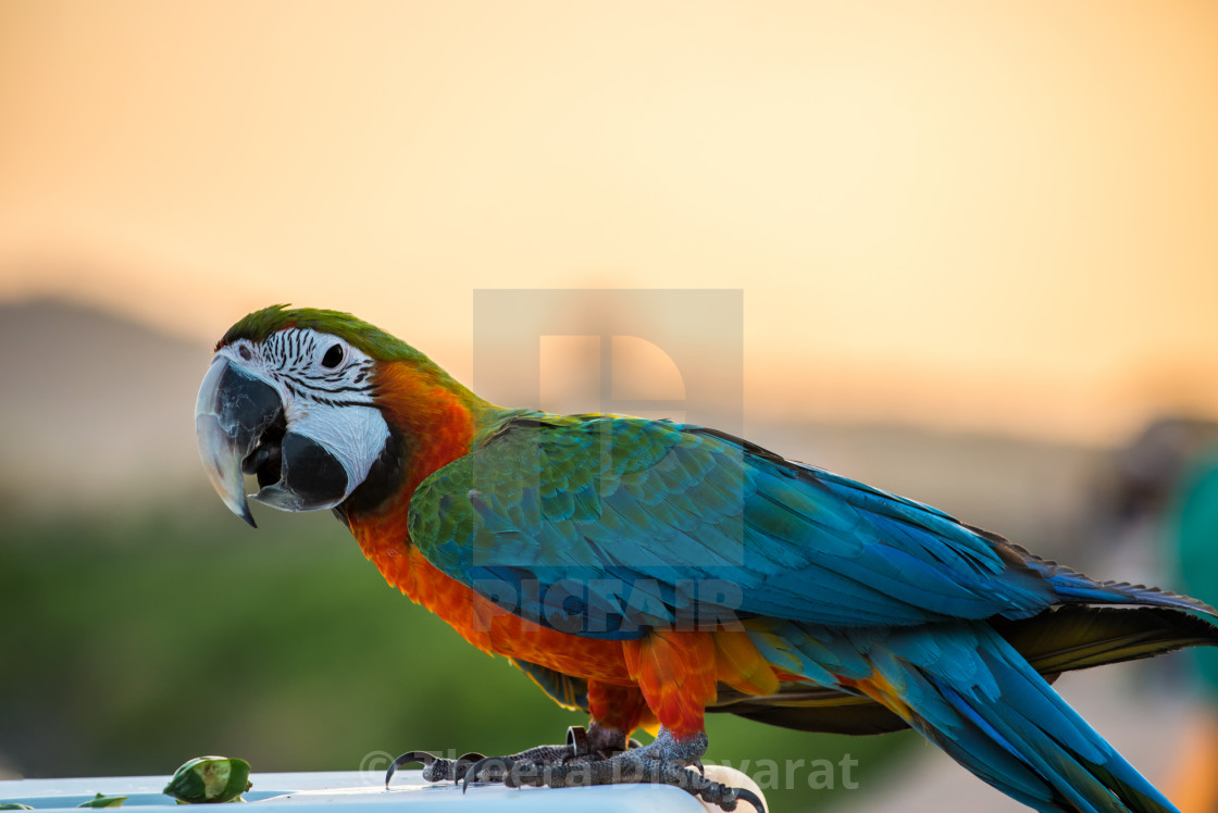 """Parrot, lovely bird, animal and pet at the natural park"" stock image"