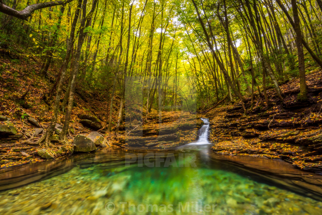 """Pool in the woods"" stock image"