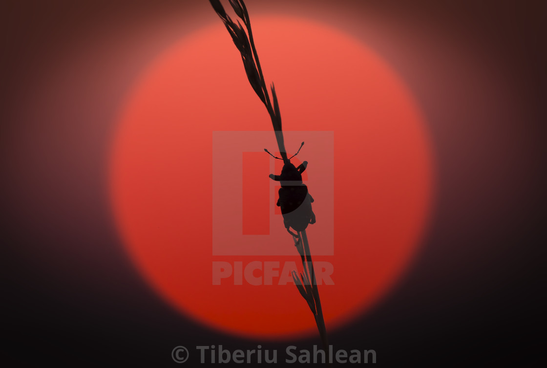 """""""Caught in the sunset"""" stock image"""