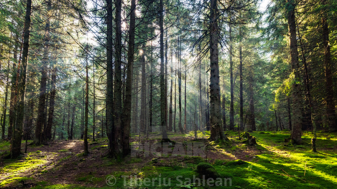 """Fairy forest"" stock image"