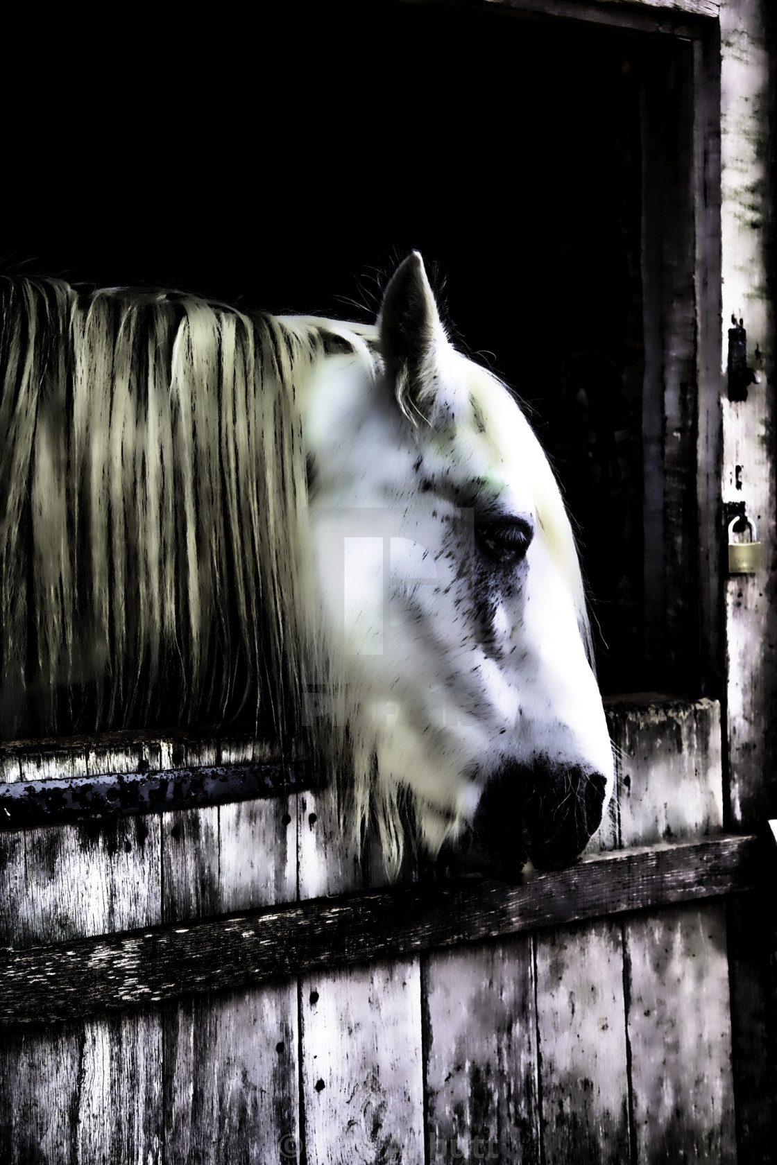 Ghost Horse License Download Or Print For 10 00 Photos Picfair