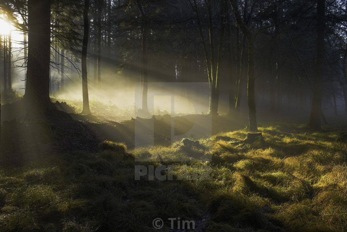 """Enchanted Forest"" stock image"