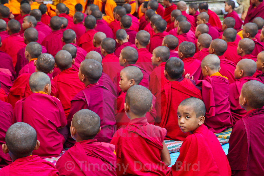 """Distracted Buddhist novice monk"" stock image"