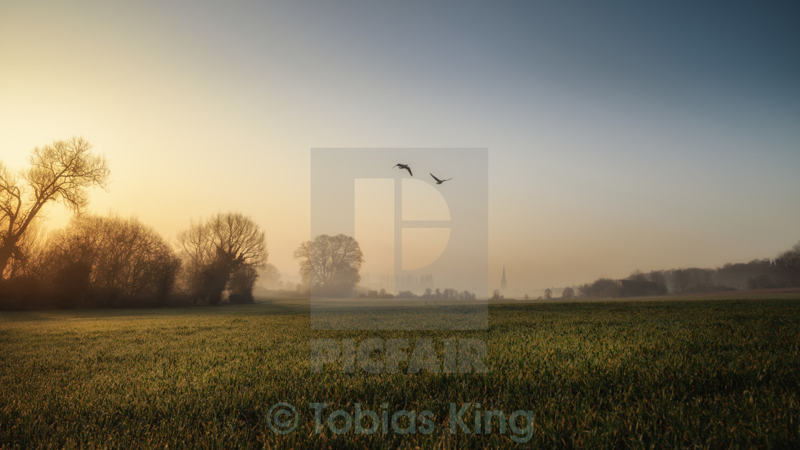 """Geese At Dawn"" stock image"