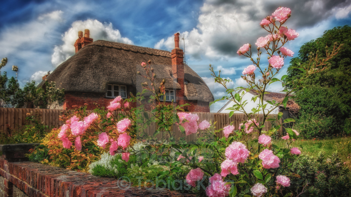"""English Roses"" stock image"