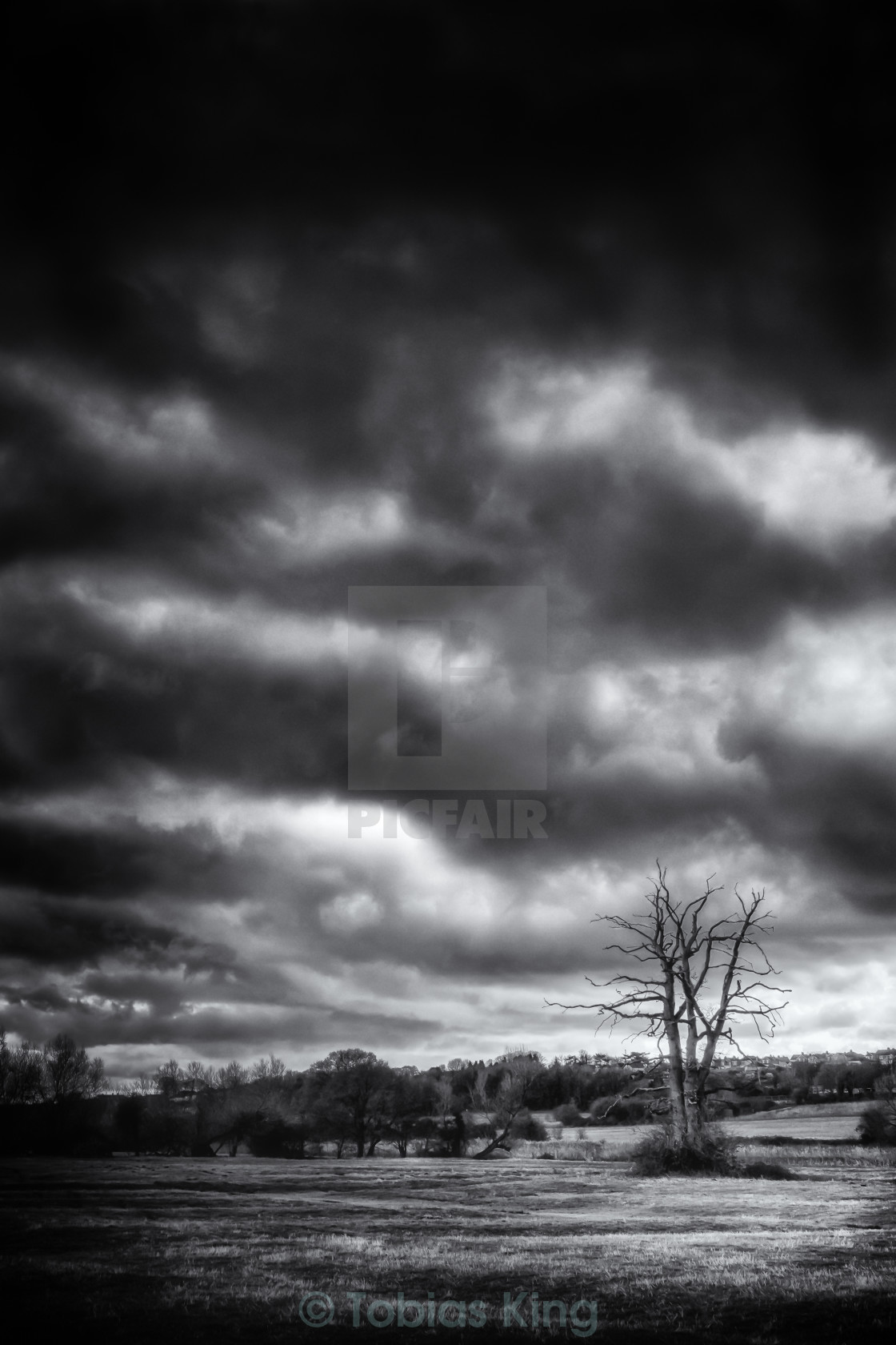 """Storm Tree"" stock image"