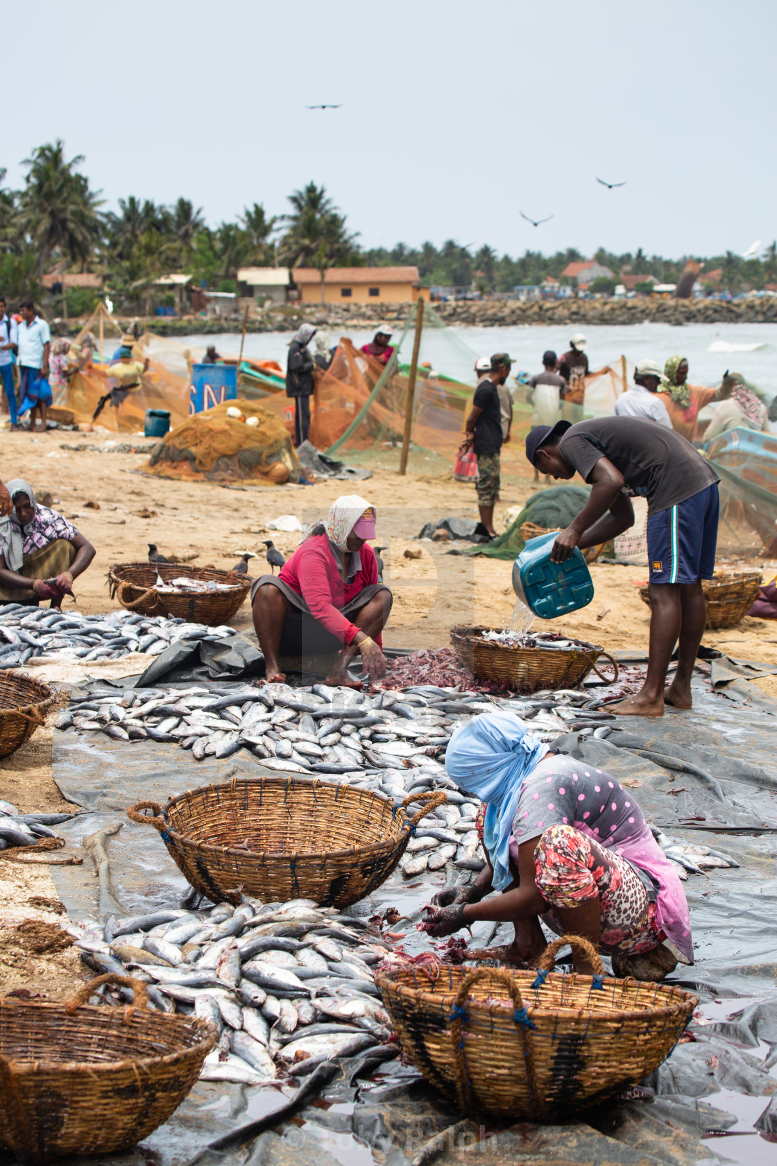 """Sorting the catch"" stock image"
