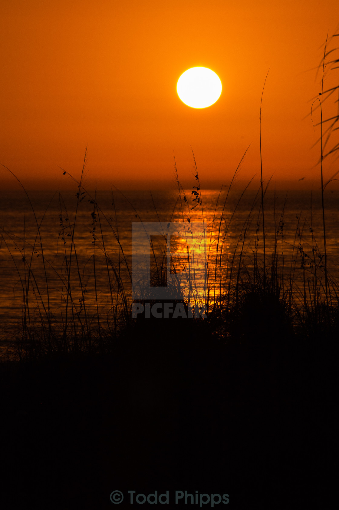 """Sarasota Sunset"" stock image"