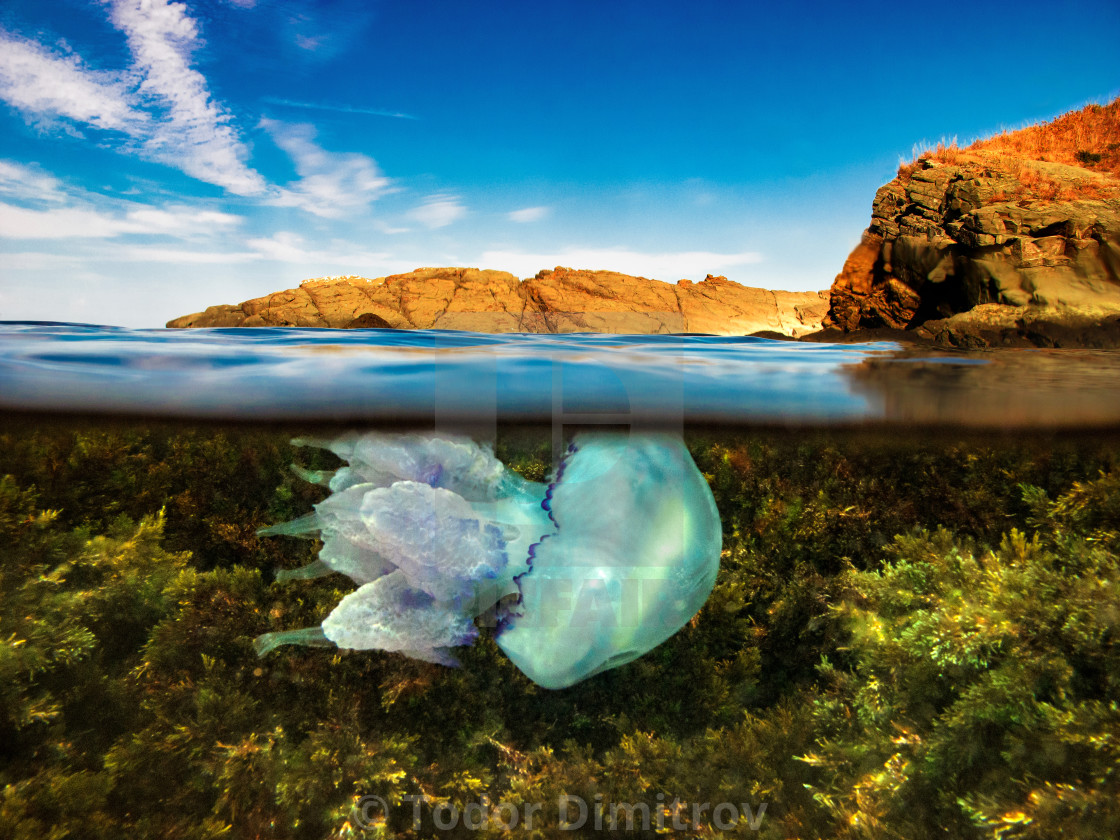 """Split Level Jellyfish And Rocks"" stock image"