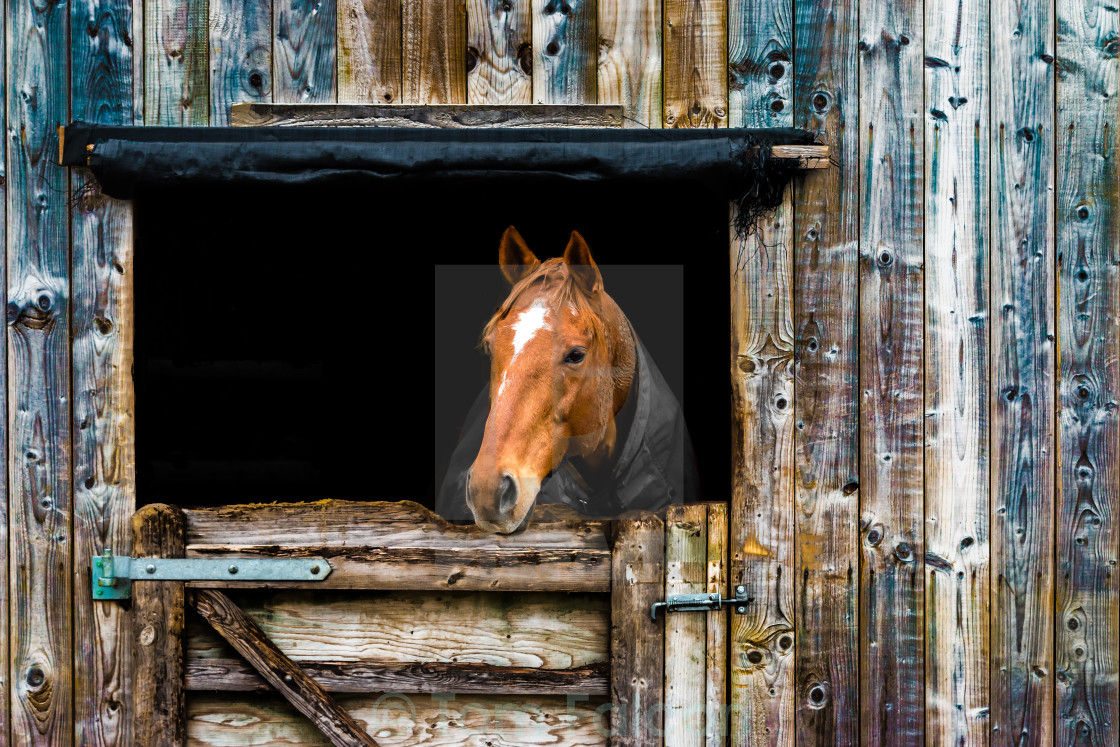 """A Horse's Outlook"" stock image"