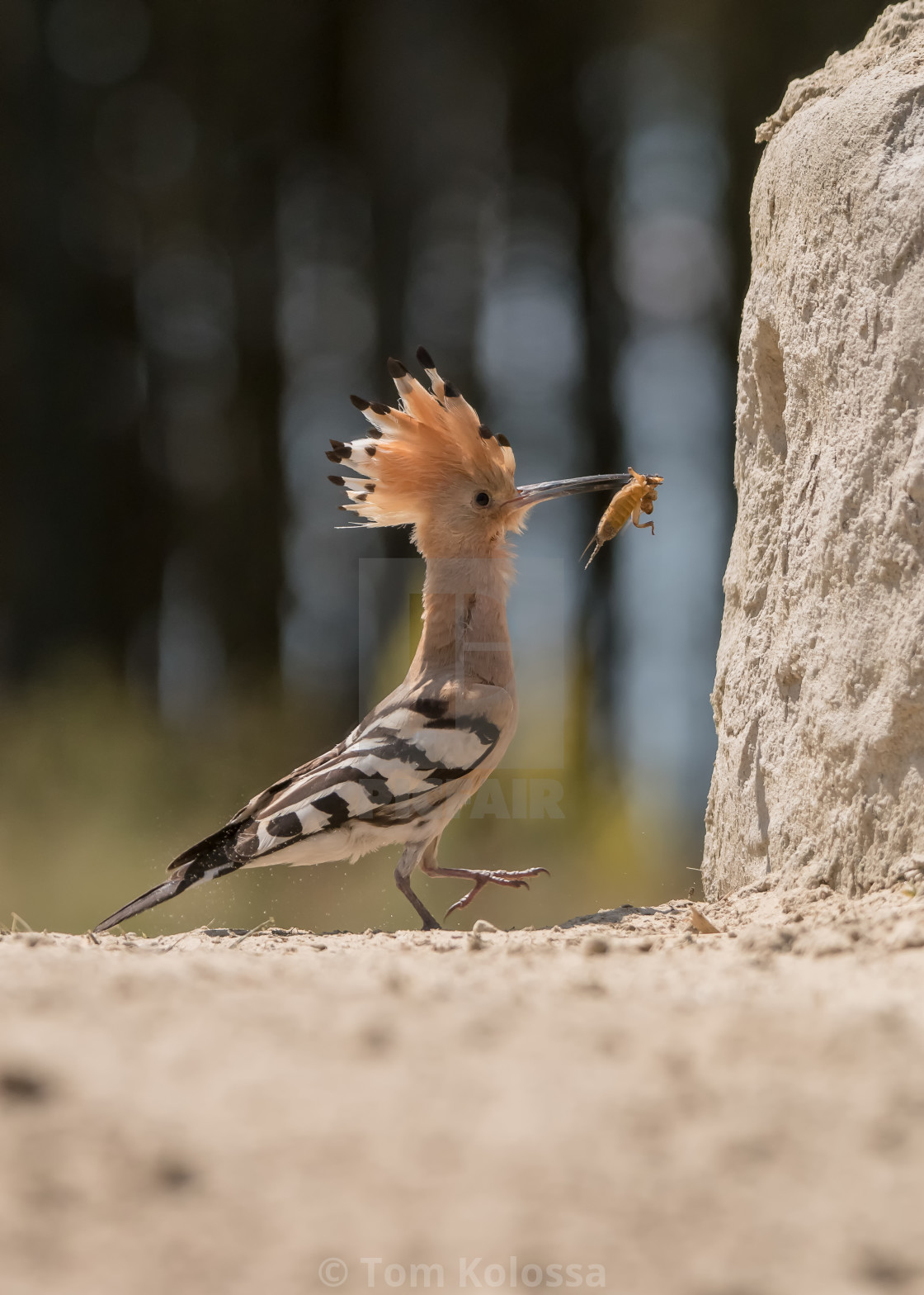 """""""Bird in forest"""" stock image"""