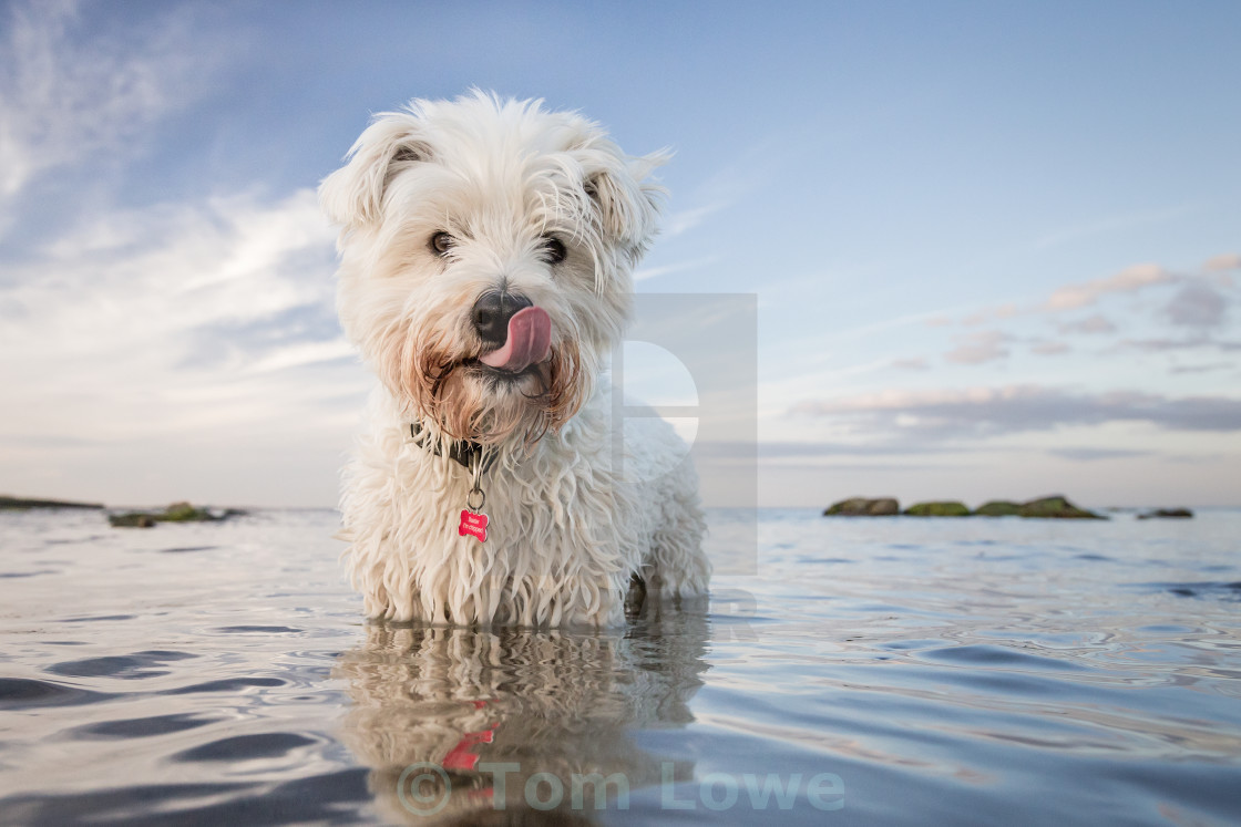 """Salty Sea Dog"" stock image"
