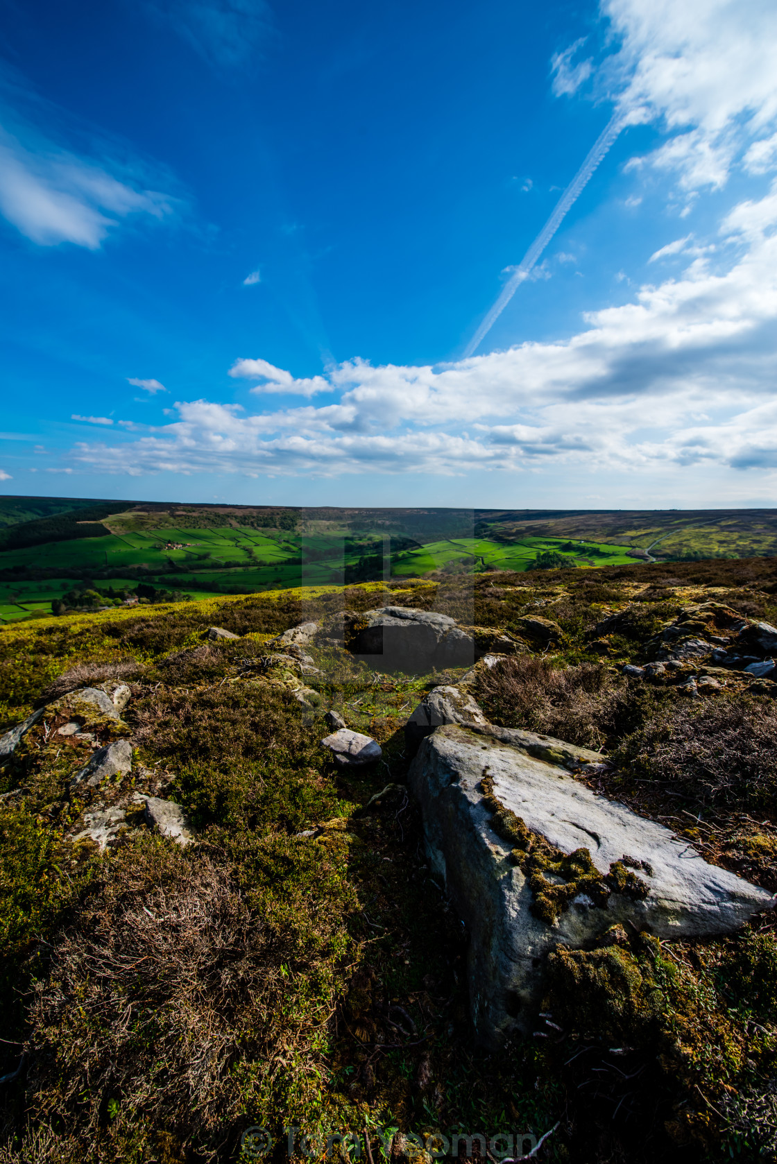 """North Yorkshire Moor (upright)"" stock image"