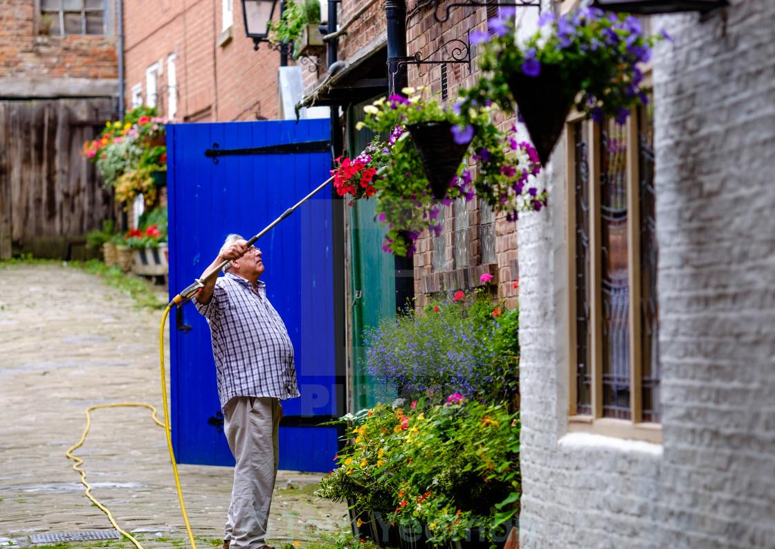 """Man watering hanging baskets wide"" stock image"