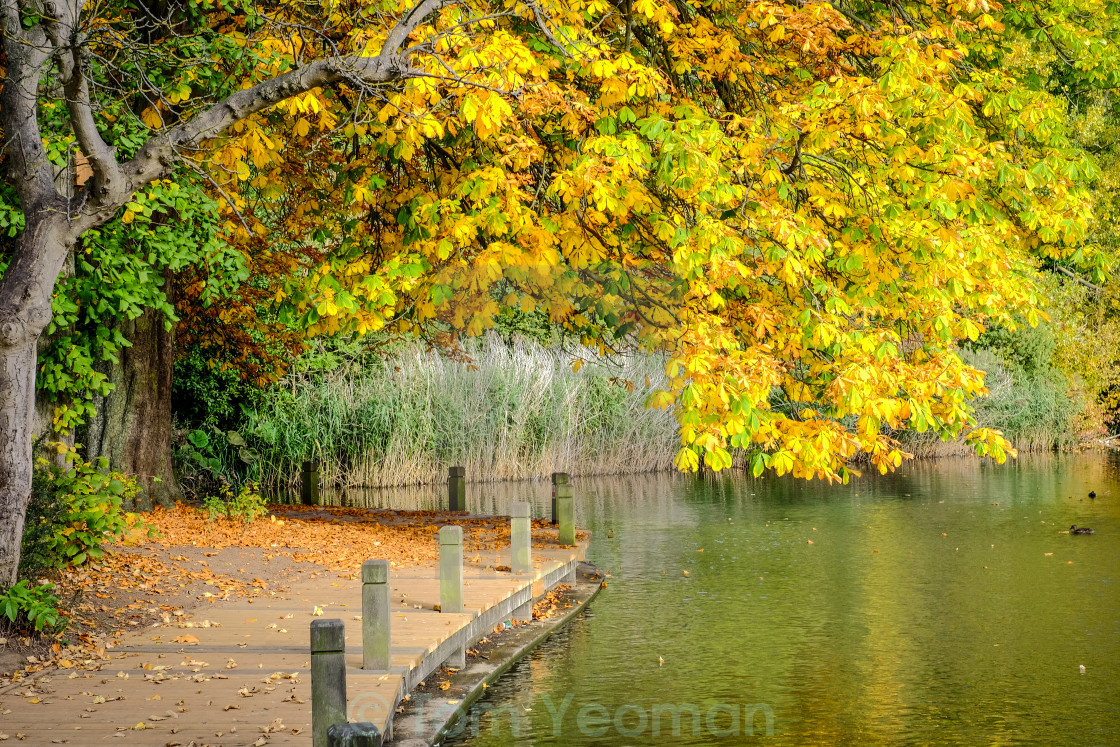 """Autumn tree overhanging lake (wide)"" stock image"