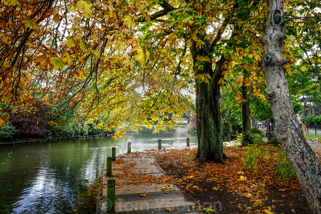 """""""Autumn leaves on the boardwalk"""" stock image"""