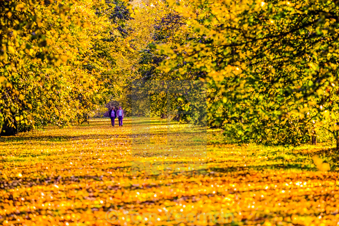 """""""Autumn walk in the woods"""" stock image"""