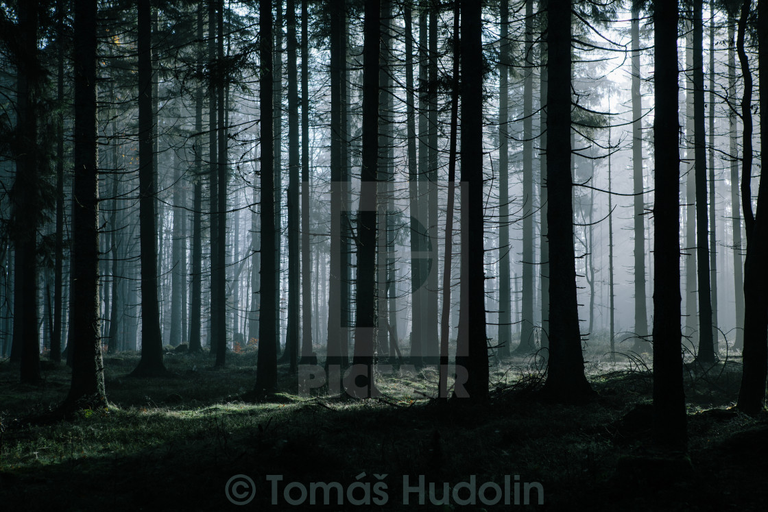 """Mystery forest"" stock image"