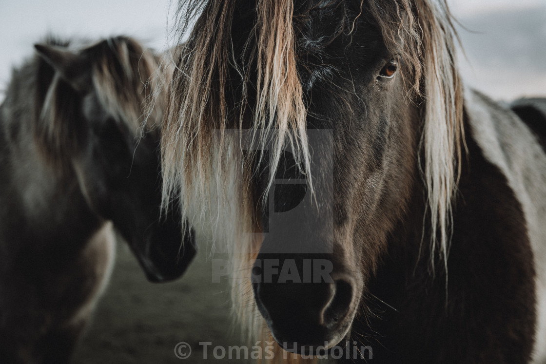 """Close up straight look of horse with another one in background"" stock image"