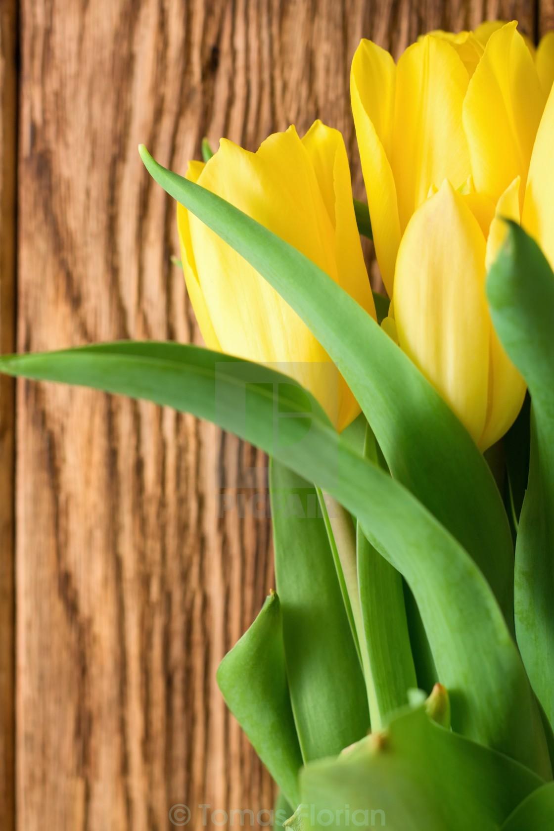 """Vertical photo of vibrant yellow tulips"" stock image"