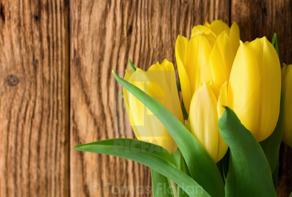 """""""Vibrant yellow tulips in front of wooden board"""" stock image"""