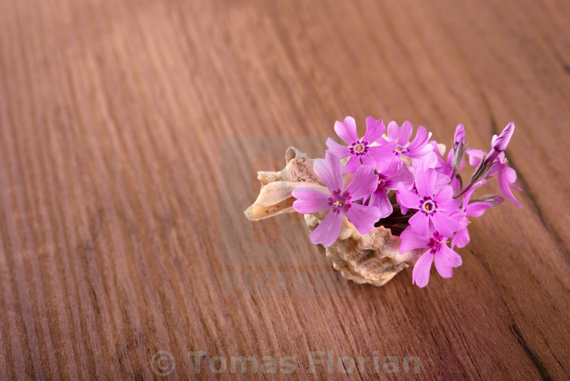 """""""Several pink carnations placed in seashell on wooden board"""" stock image"""