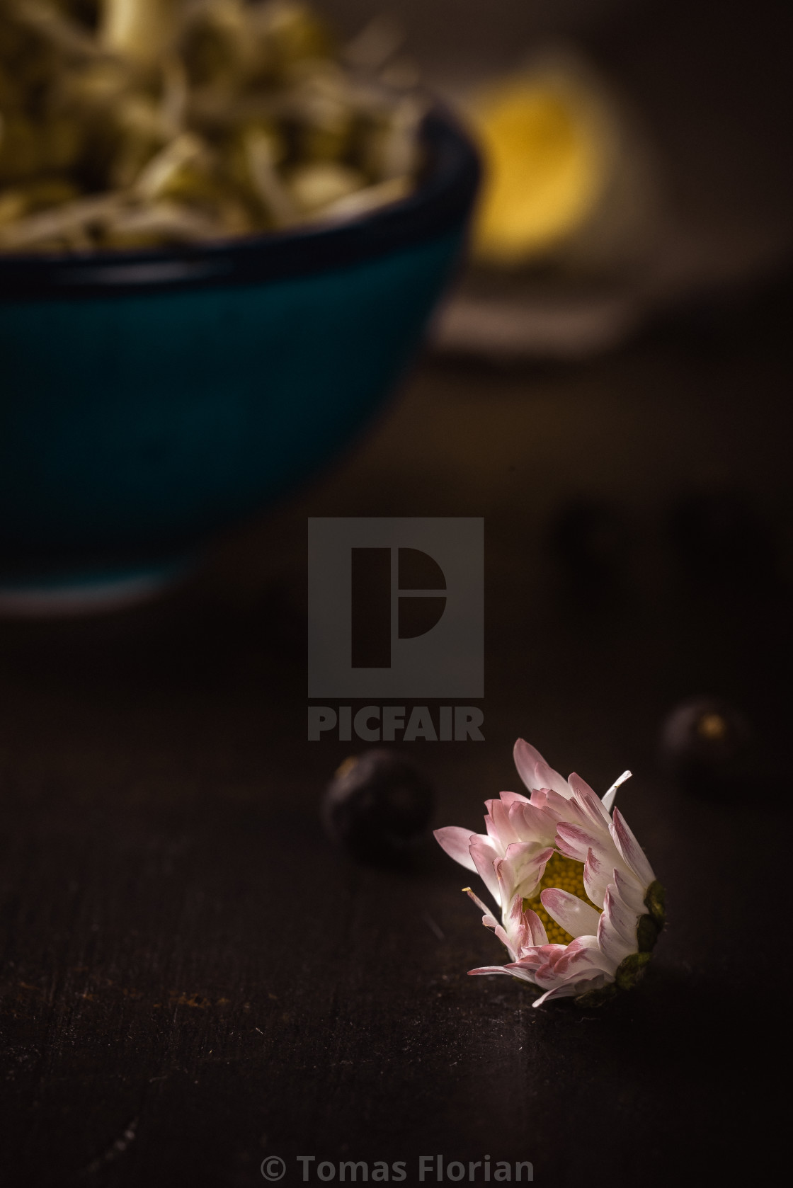 """Small bloom of daisy flower in front of bowl with mung bean sprouts"" stock image"
