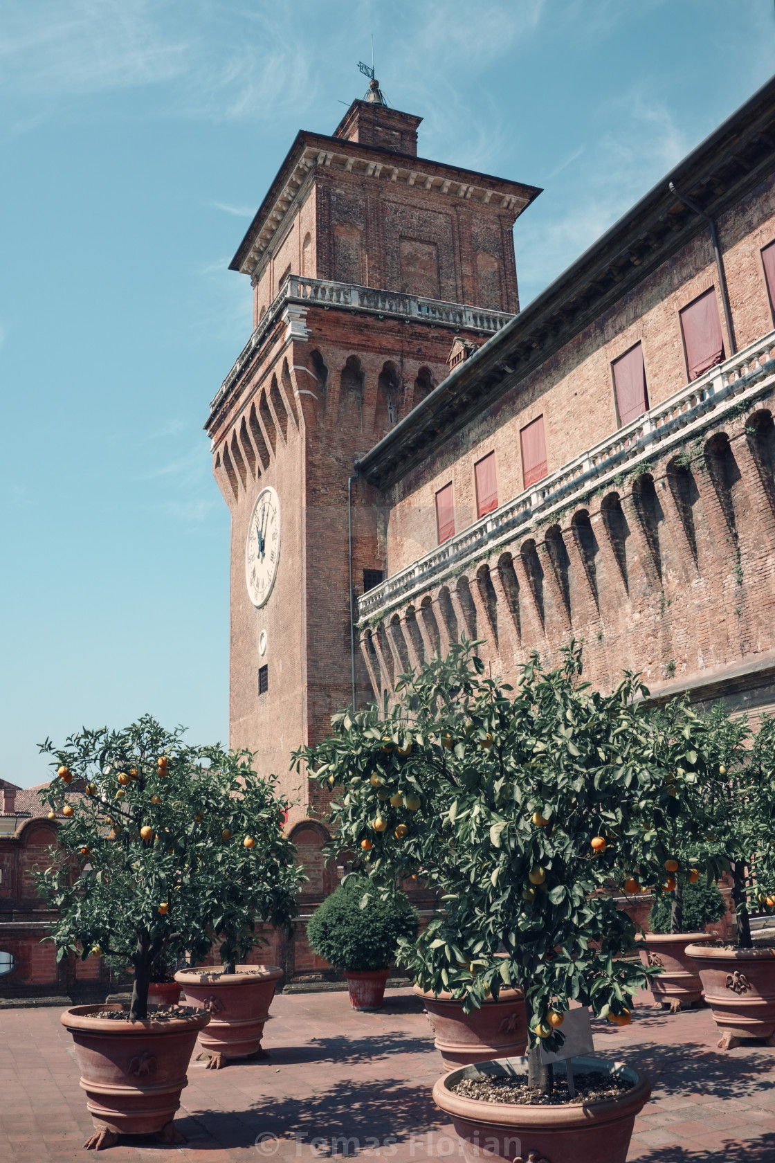 """Several orange trees on the roof of castle in Ferrara"" stock image"