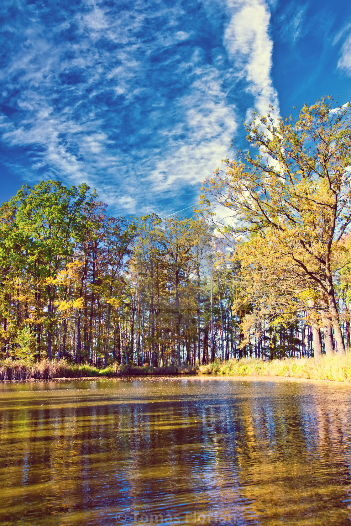 """Small lake with several trees around in autumn time"" stock image"