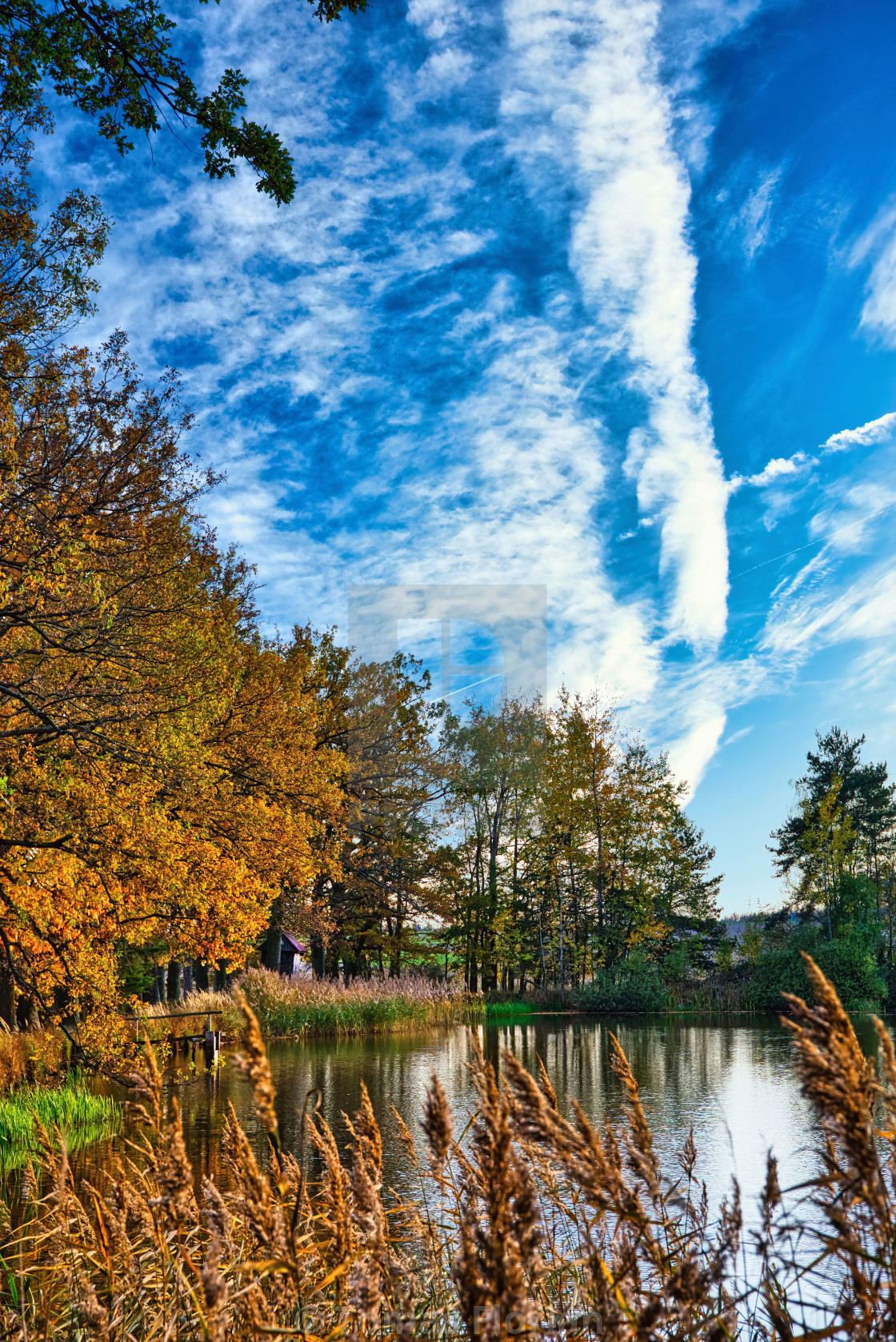 """Autumn scene with view over small pond"" stock image"