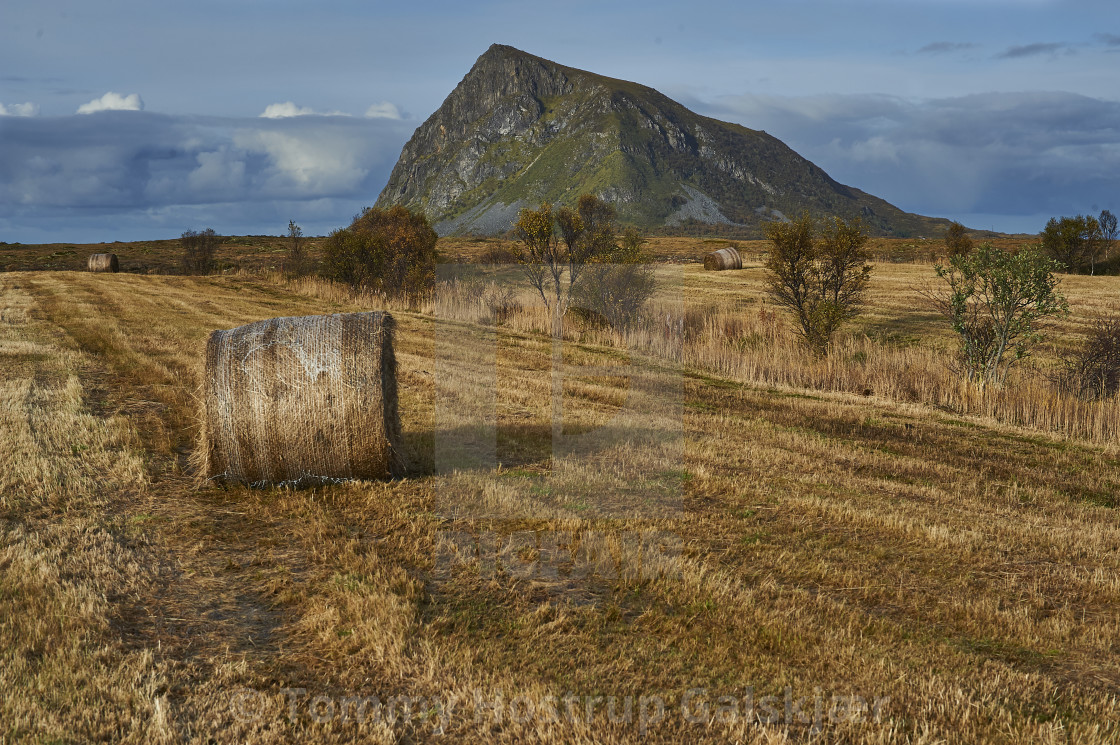 Hay Rolls On Gimsoy Ni 1 License Download Or Print For