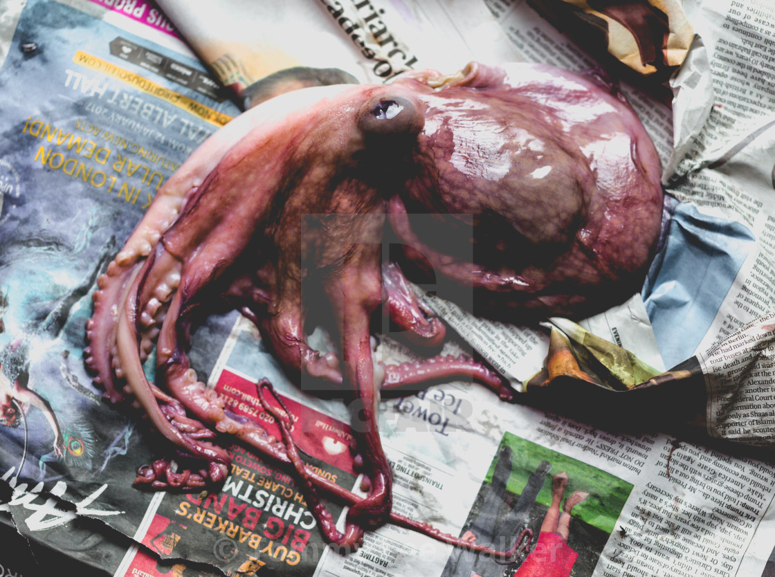 """Raw fresh octopus on newspaper sheets"" stock image"