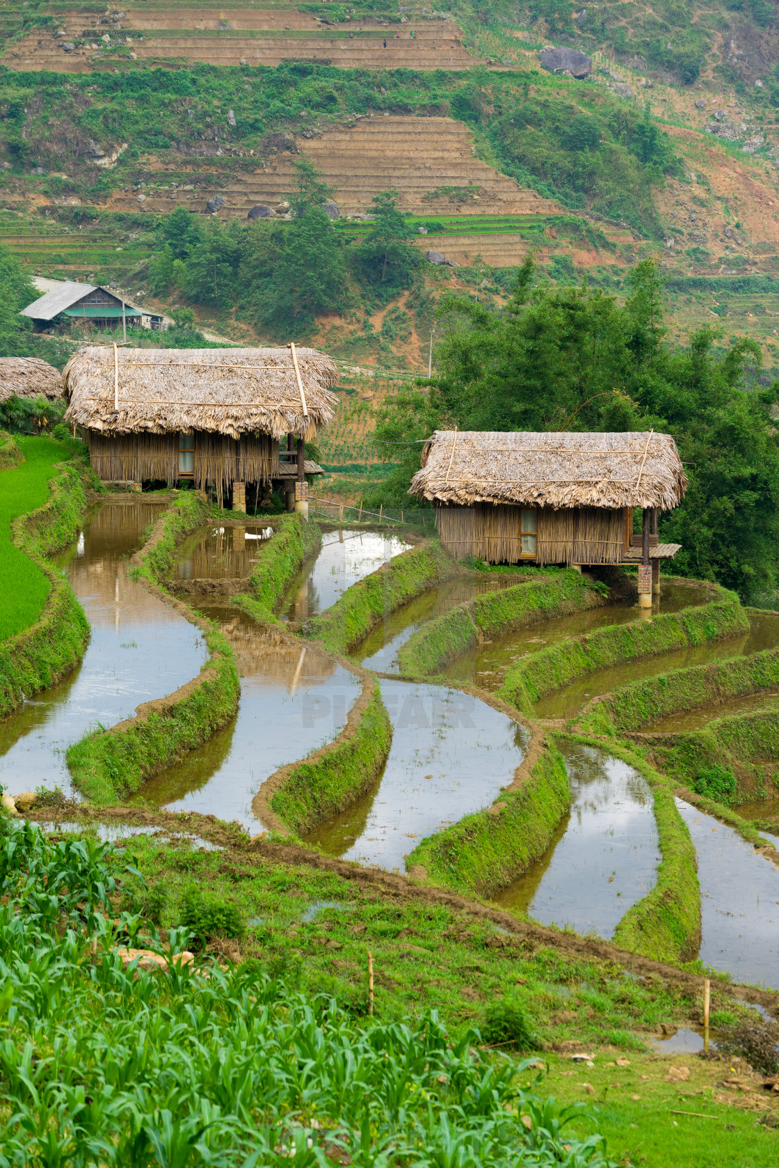 """""""Beautiful terraced rice field in Lao cai province in Vietnam"""" stock image"""