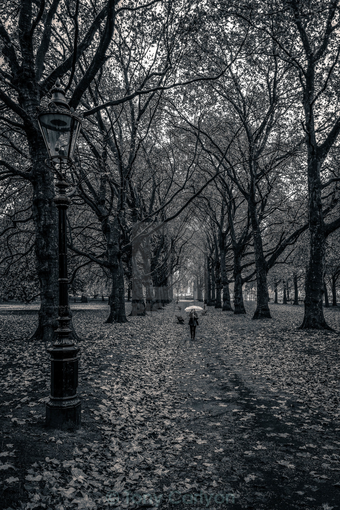 """Lady with umbrella in Green Park London"" stock image"