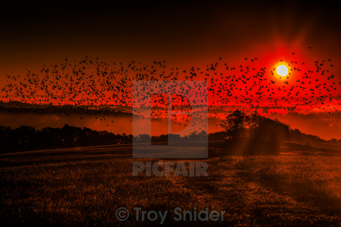 """Flock of Birds at Dawn"" stock image"
