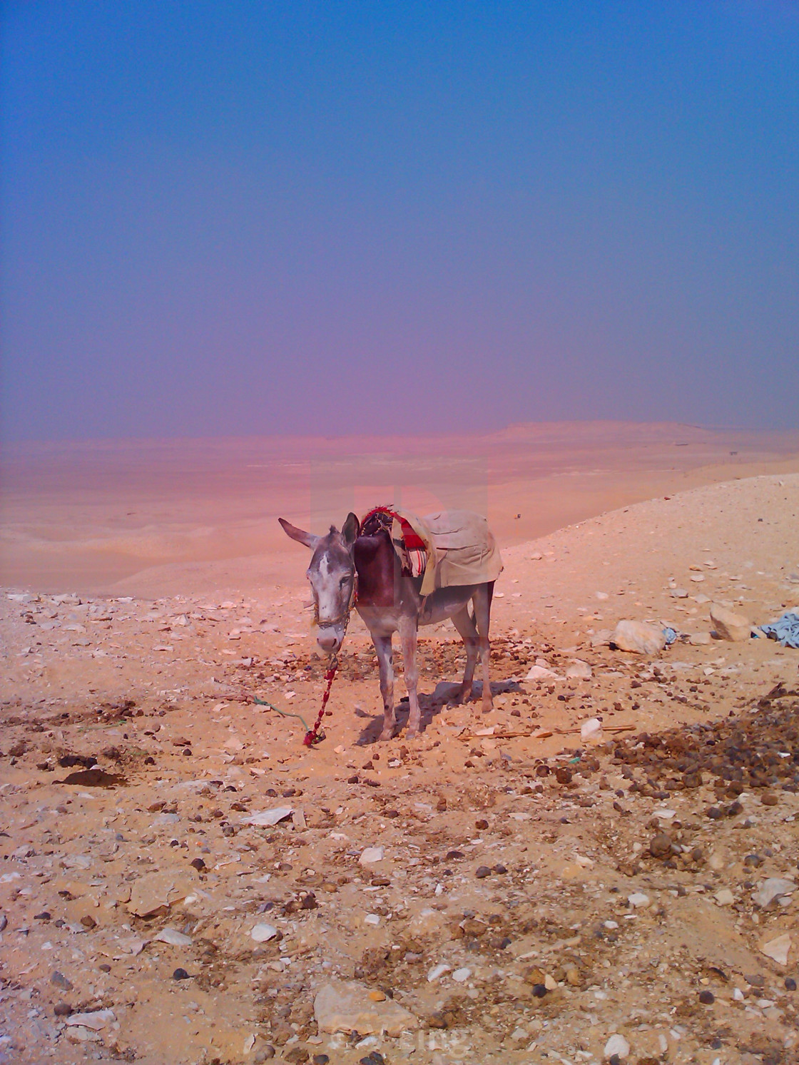 """""""Lost Donkey in Egypt"""" stock image"""