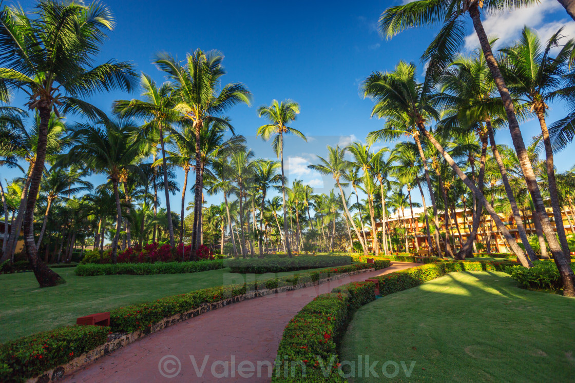 pathway and tropical garden in beach resort punta cana license
