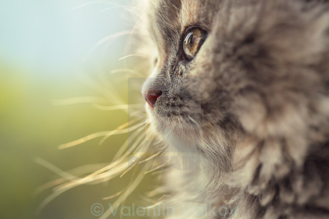 """Portrait of adorable little cat defocused"" stock image"