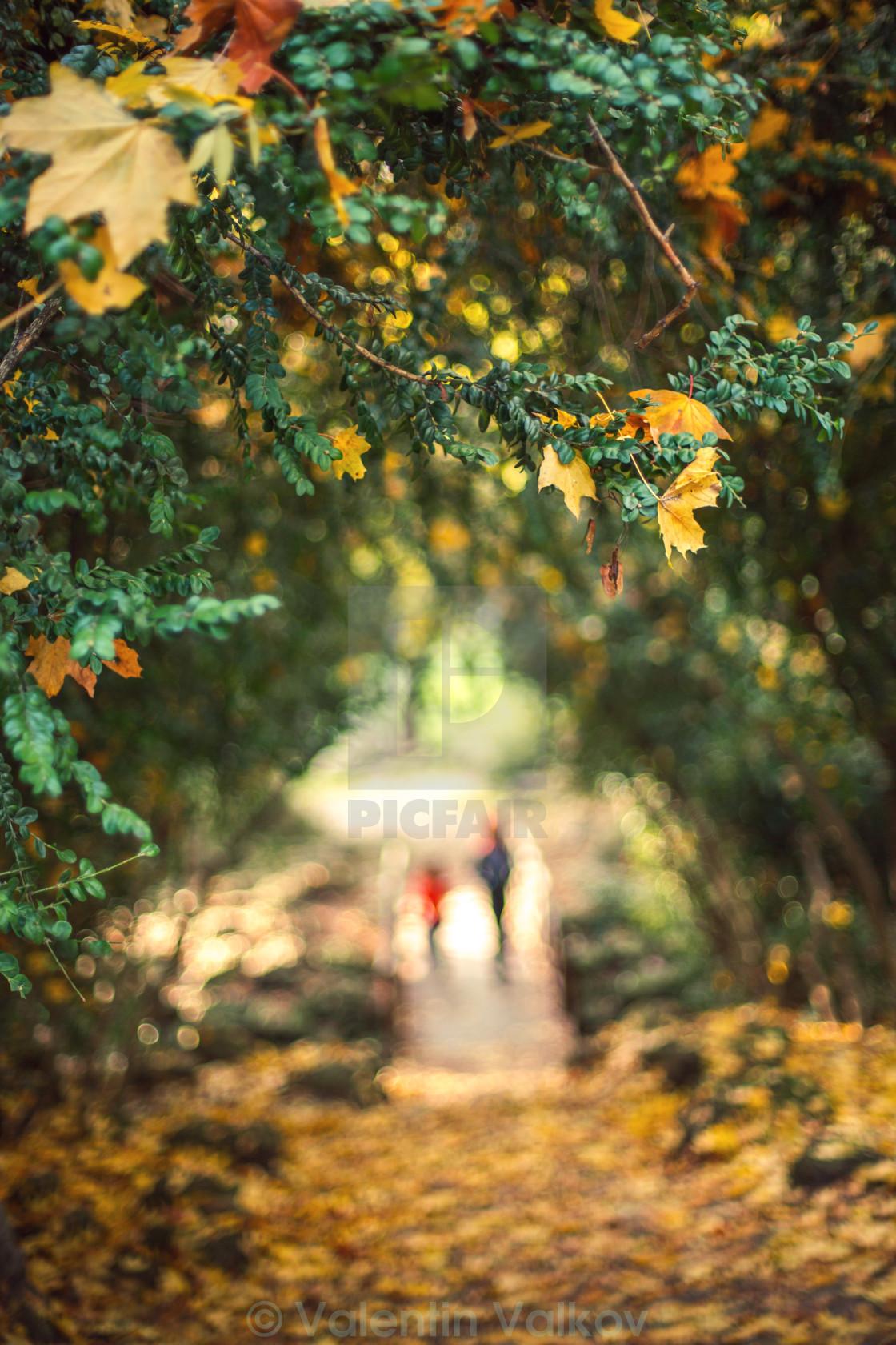 """Autumn leaf and defocused background"" stock image"
